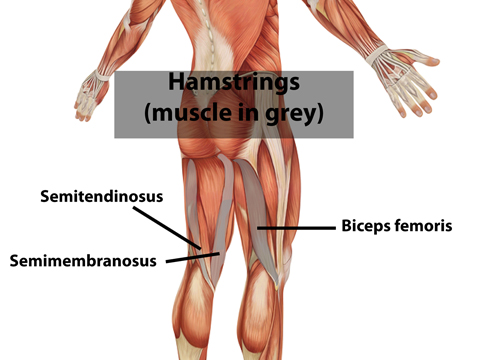 How serious is a hamstring injury   Orthopedic   Spine